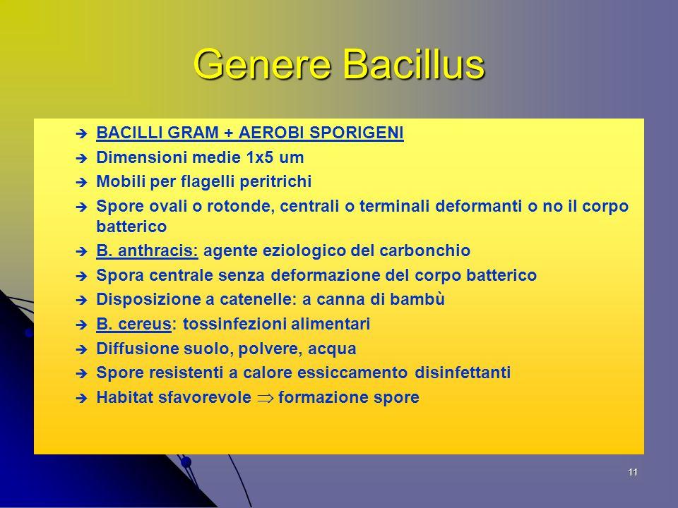 Genere Bacillus BACILLI GRAM + AEROBI SPORIGENI