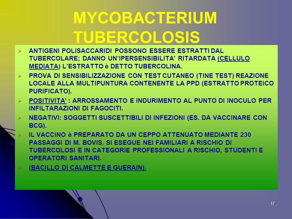 MYCOBACTERIUM TUBERCOLOSIS