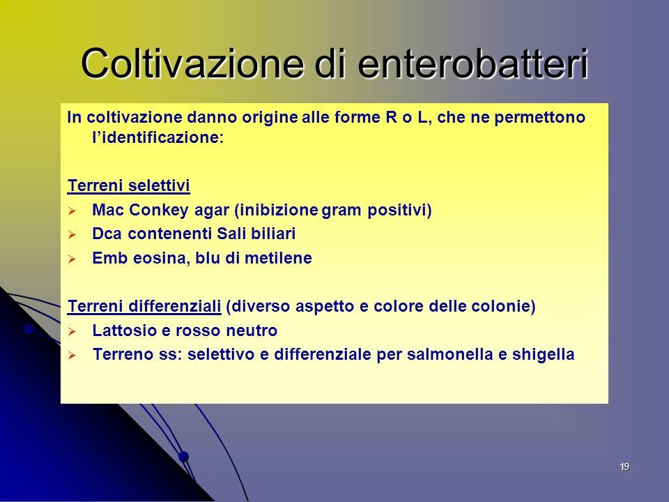 Coltivazione di enterobatteri