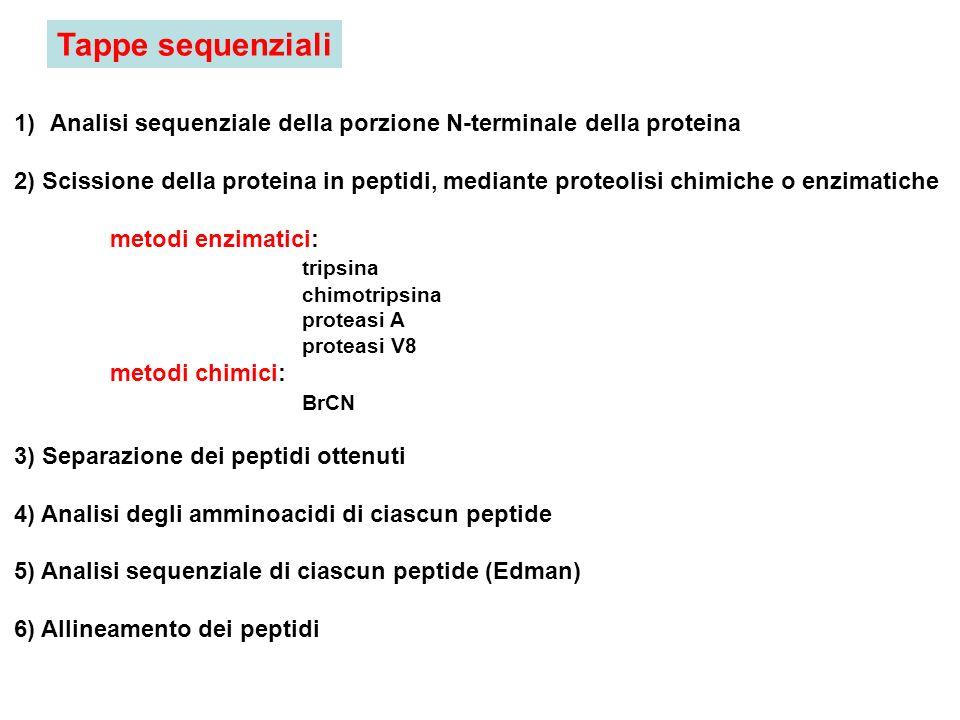Tappe sequenziali Analisi sequenziale della porzione N-terminale della proteina.
