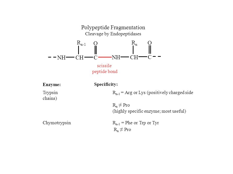 Polypeptide Fragmentation