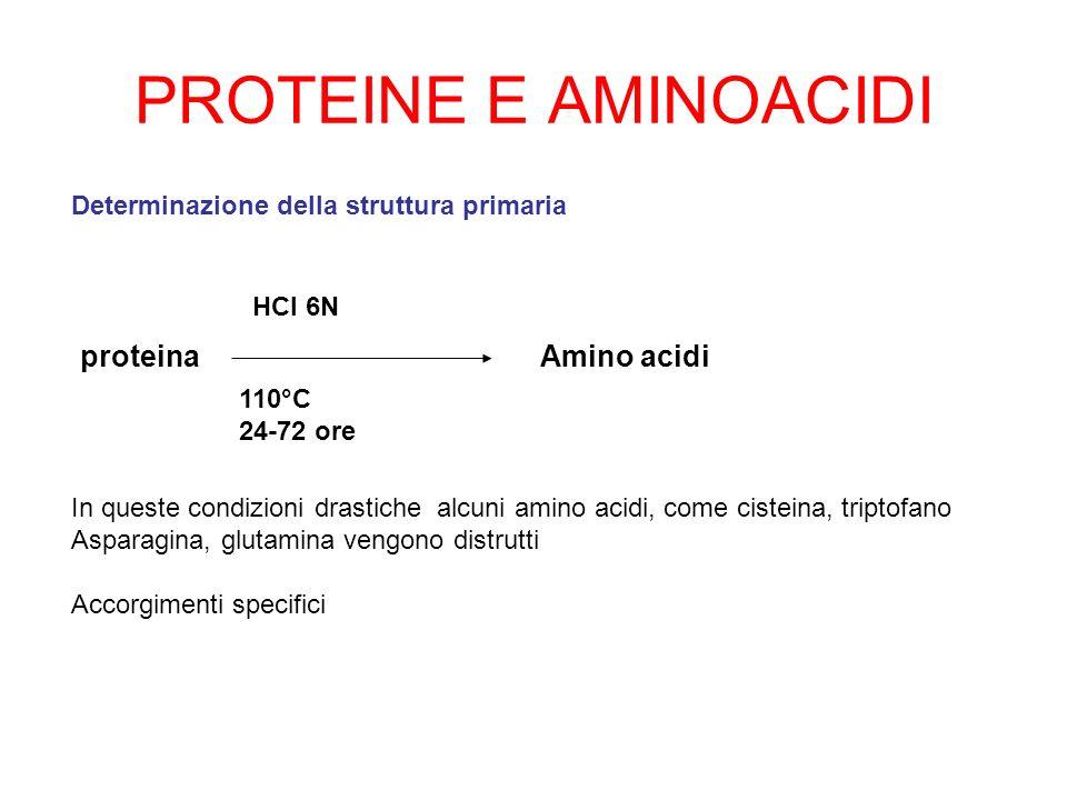 PROTEINE E AMINOACIDI proteina Amino acidi
