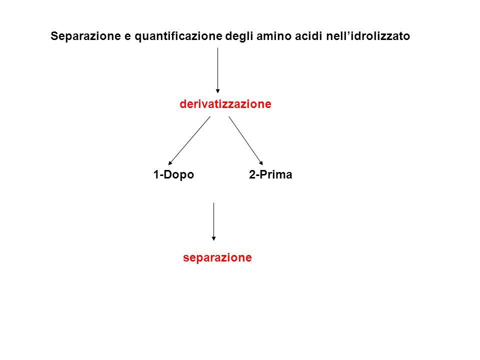 Separazione e quantificazione degli amino acidi nell'idrolizzato