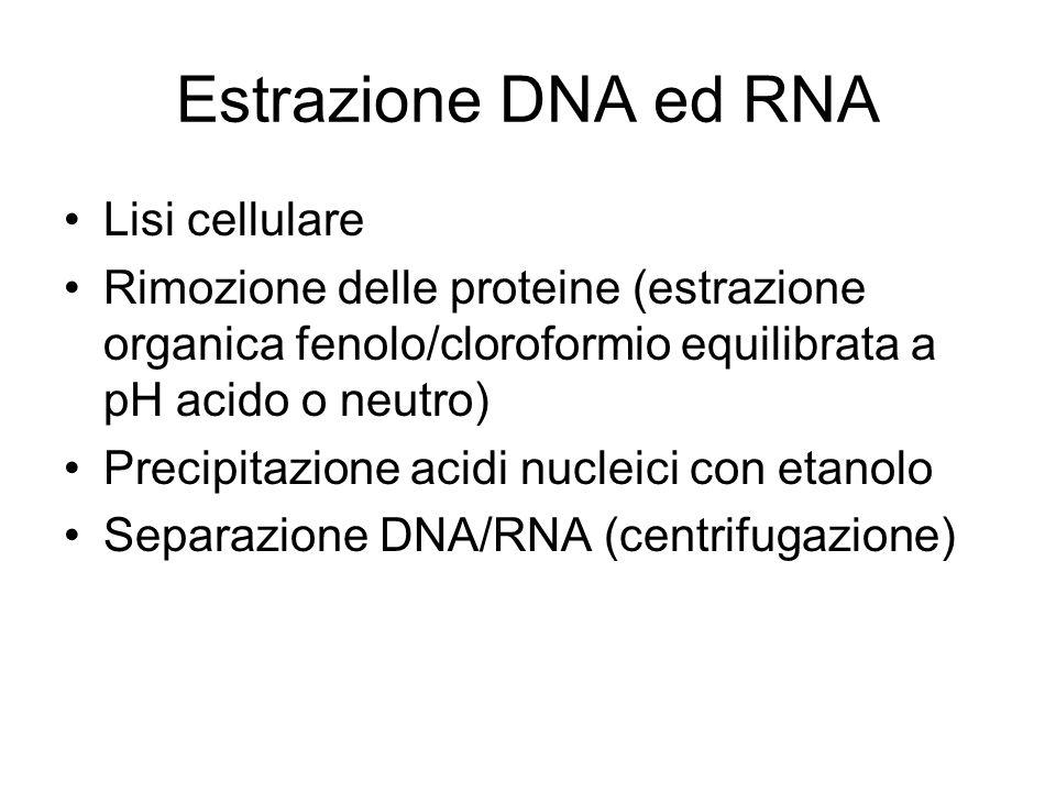 Estrazione DNA ed RNA Lisi cellulare