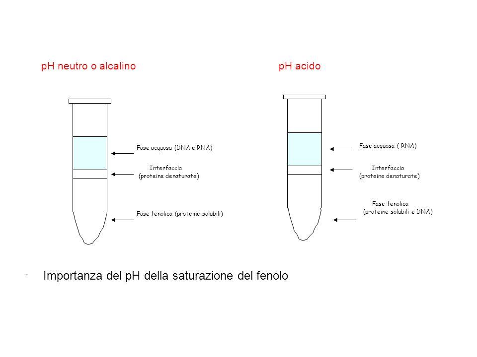 Importanza del pH della saturazione del fenolo