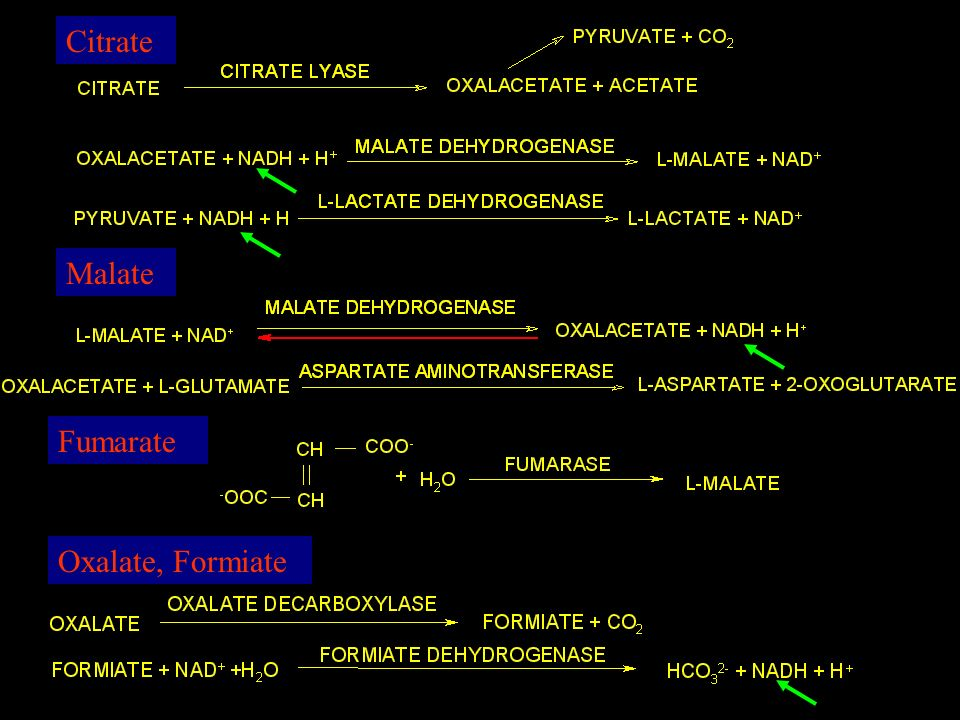 Citrate Malate Fumarate Oxalate, Formiate