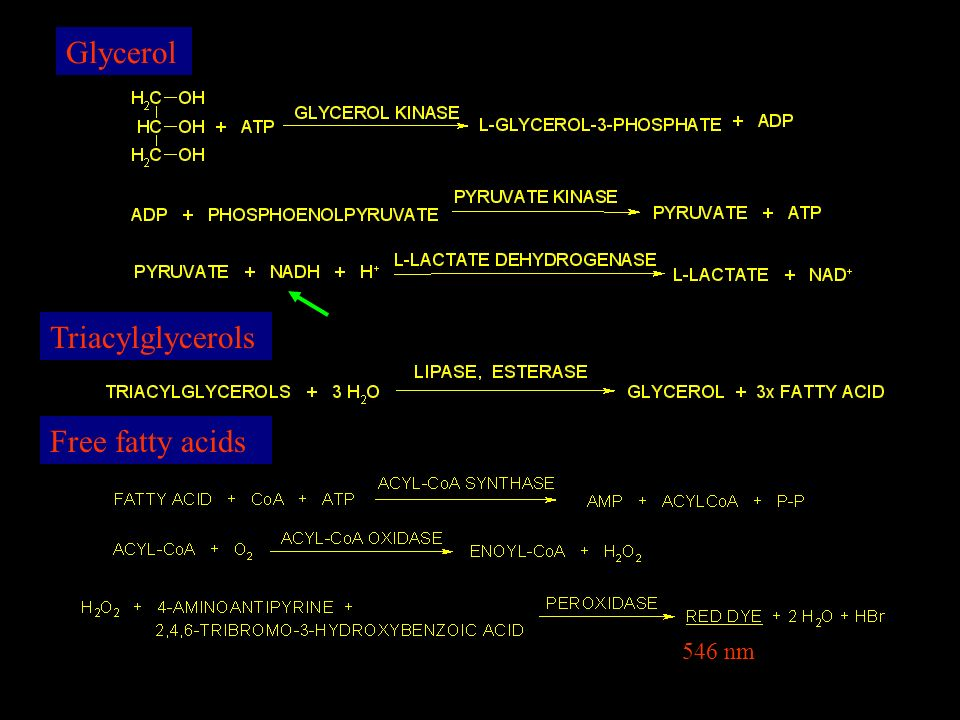 Glycerol Triacylglycerols Free fatty acids 546 nm