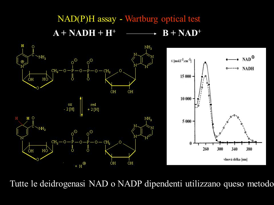 NAD(P)H assay - Wartburg optical test