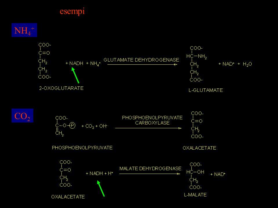 esempi NH4+ CO2
