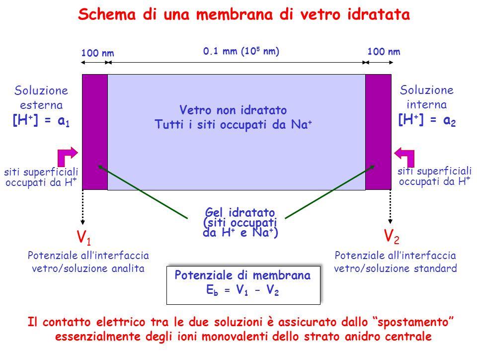 Tutti i siti occupati da Na+ Potenziale di membrana