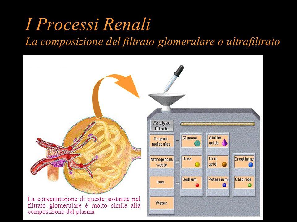 I Processi Renali La composizione del filtrato glomerulare o ultrafiltrato
