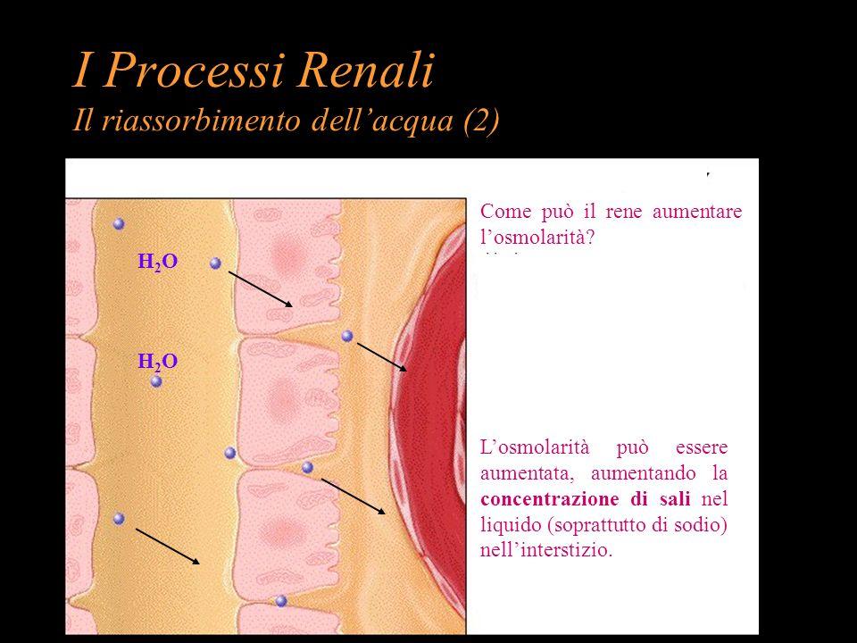 I Processi Renali Il riassorbimento dell'acqua (2)
