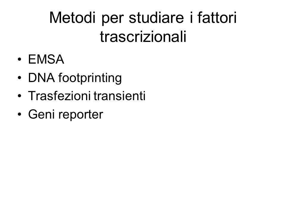 Metodi per studiare i fattori trascrizionali