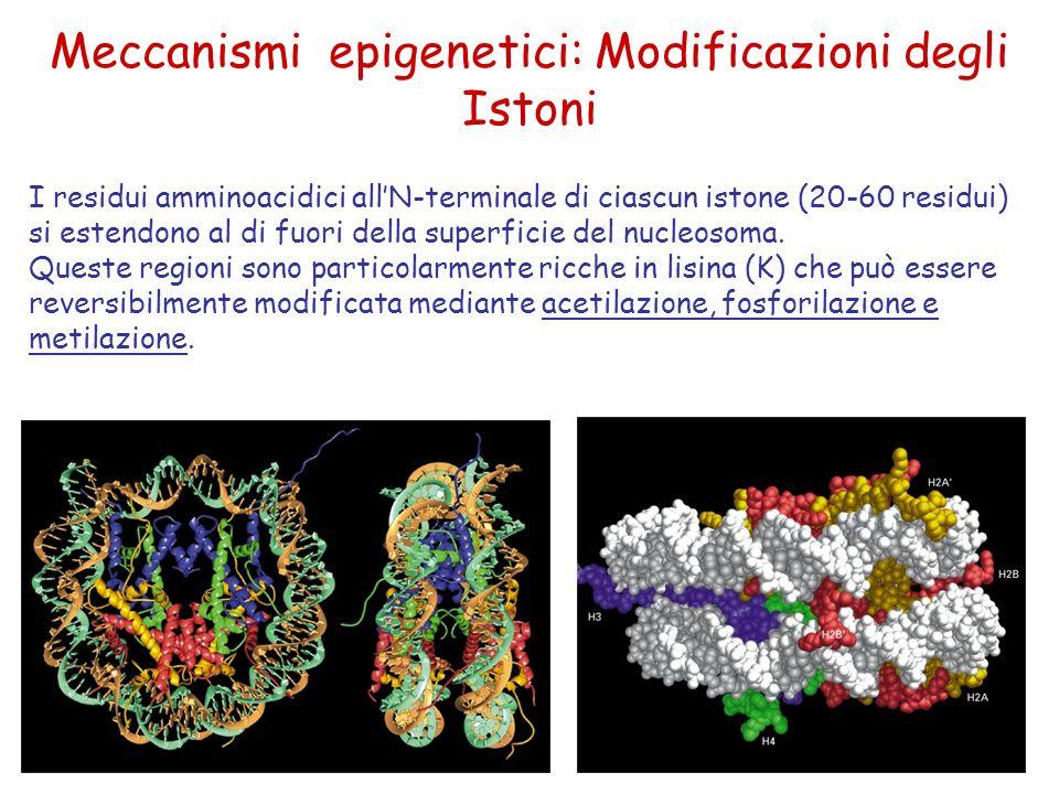 Meccanismi epigenetici: Modificazioni degli Istoni