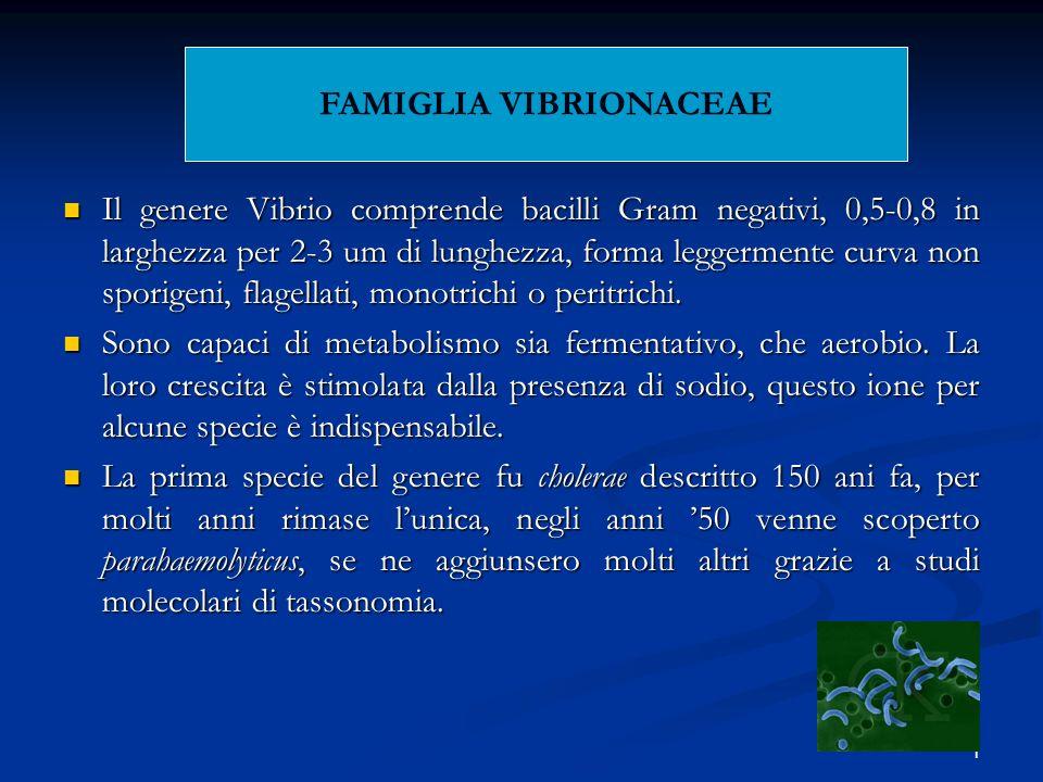 FAMIGLIA VIBRIONACEAE