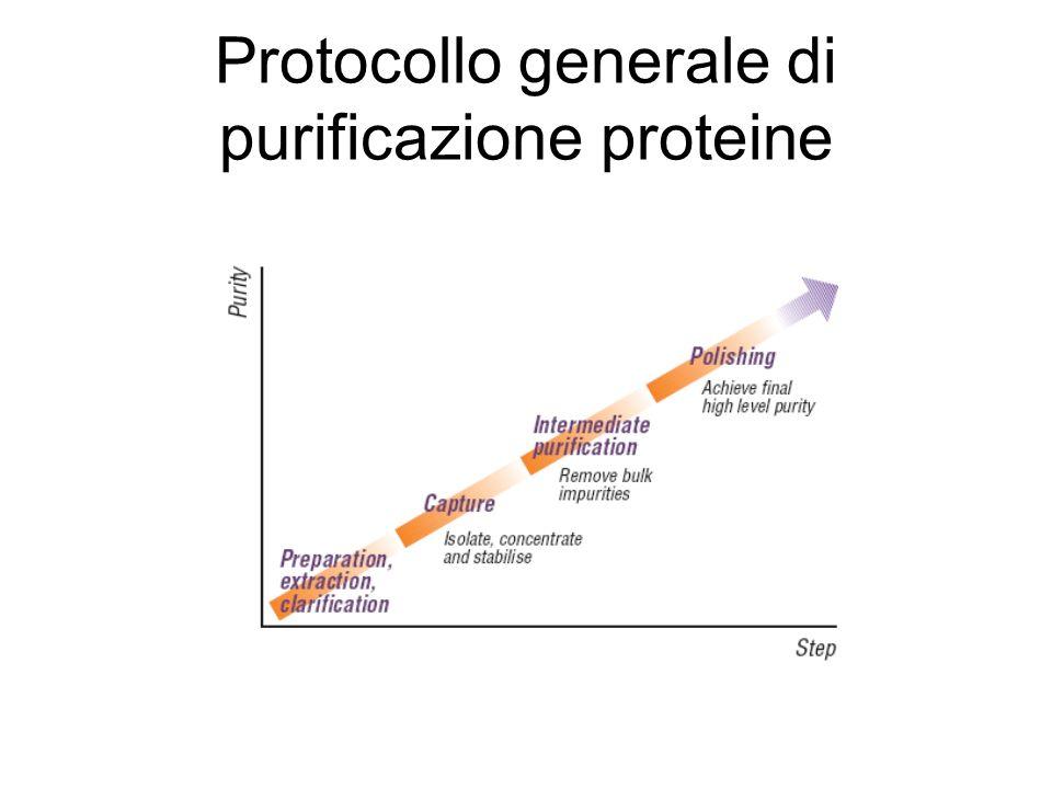Protocollo generale di purificazione proteine