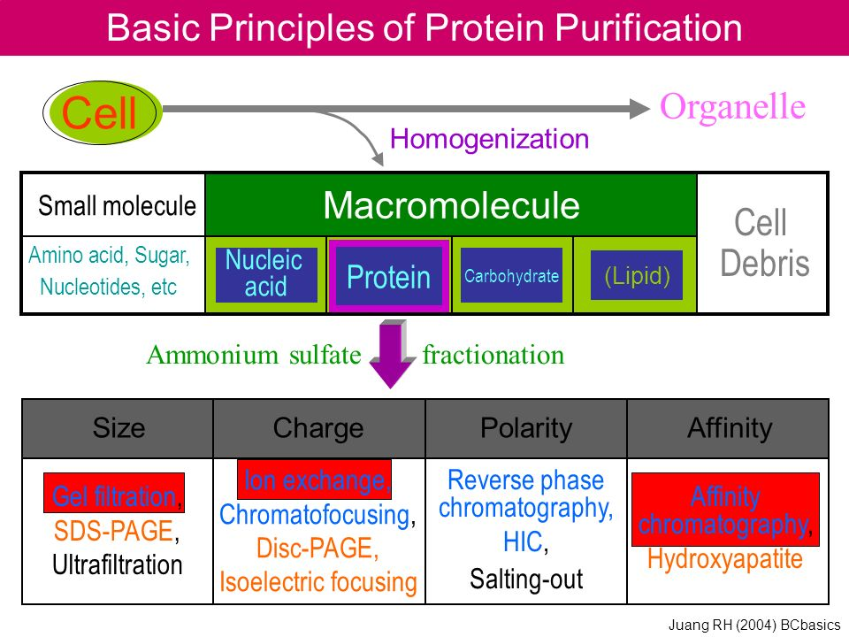 Basic Principles of Protein Purification
