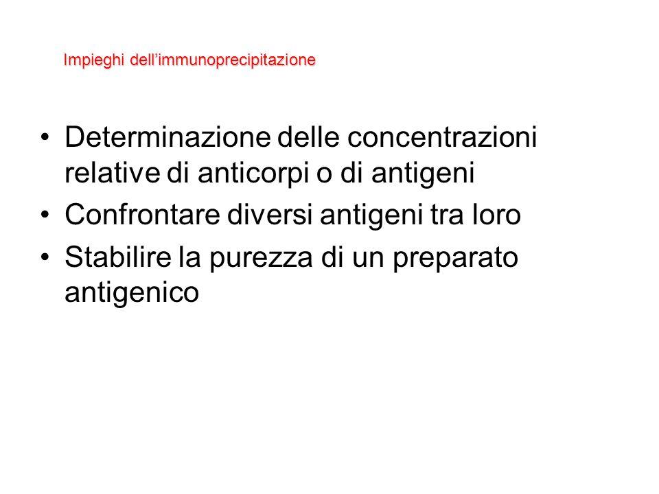 Impieghi dell'immunoprecipitazione