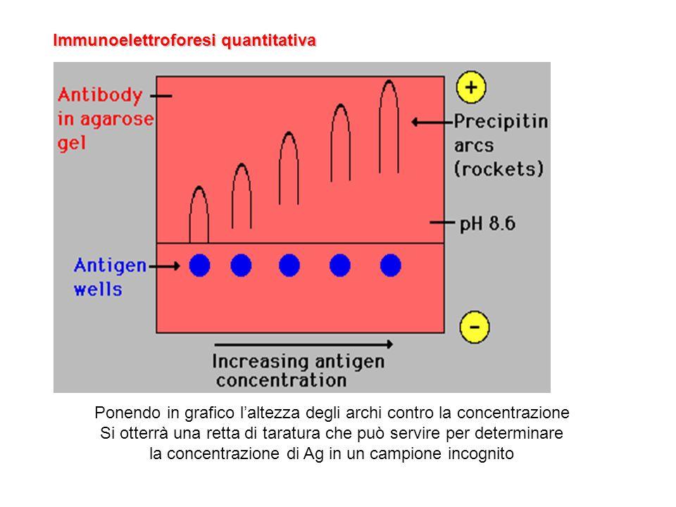 Immunoelettroforesi quantitativa
