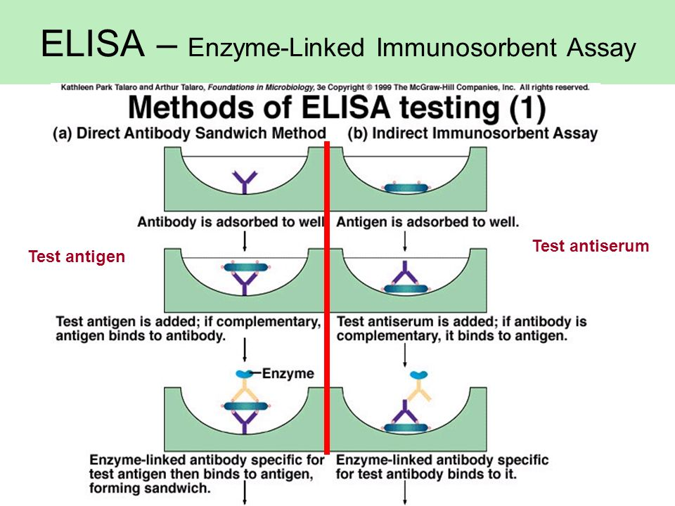 ELISA – Enzyme-Linked Immunosorbent Assay