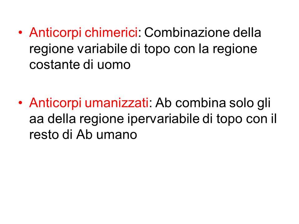 Anticorpi chimerici: Combinazione della regione variabile di topo con la regione costante di uomo