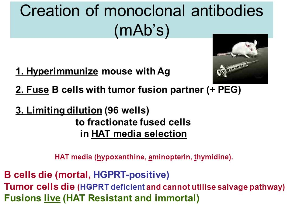 Creation of monoclonal antibodies (mAb's)