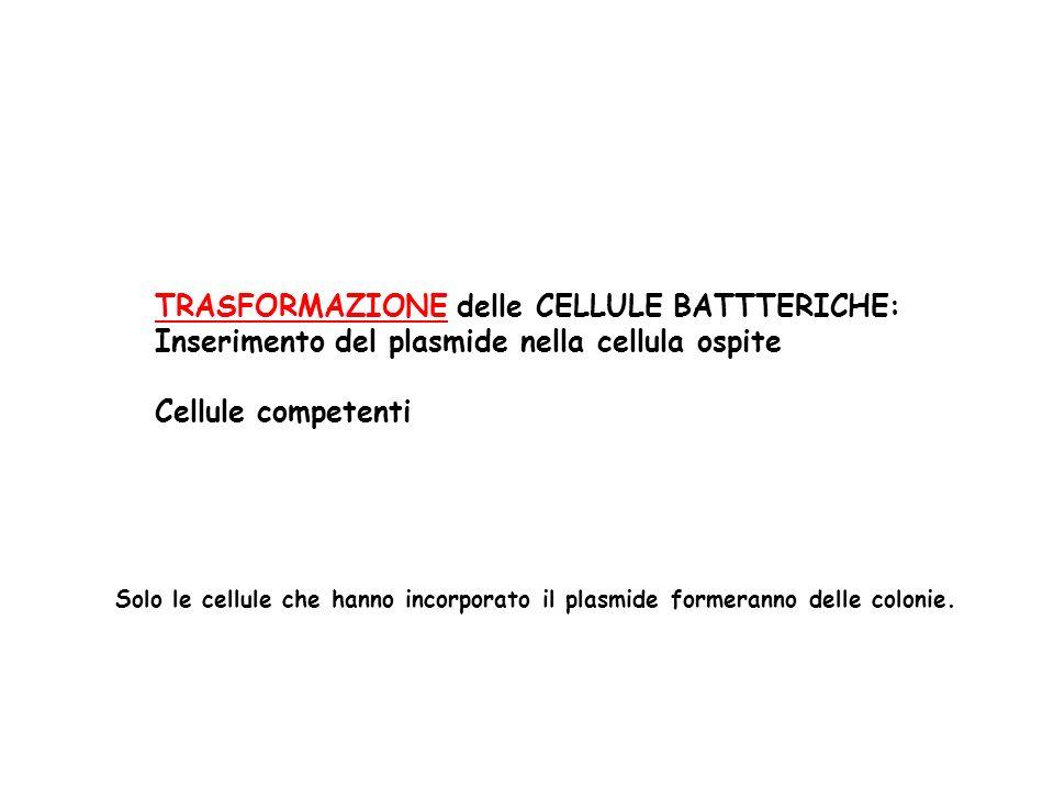 TRASFORMAZIONE delle CELLULE BATTTERICHE: