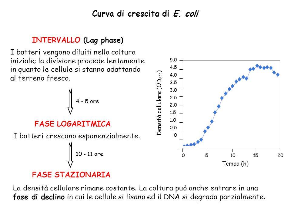 Curva di crescita di E. coli