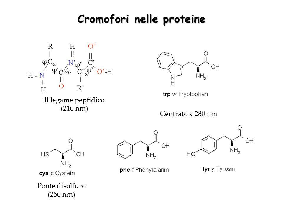Cromofori nelle proteine