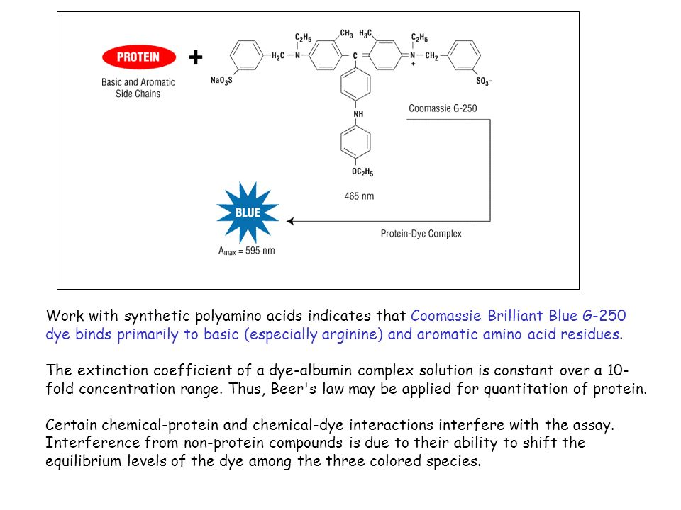 Work with synthetic polyamino acids indicates that Coomassie Brilliant Blue G-250 dye binds primarily to basic (especially arginine) and aromatic amino acid residues.