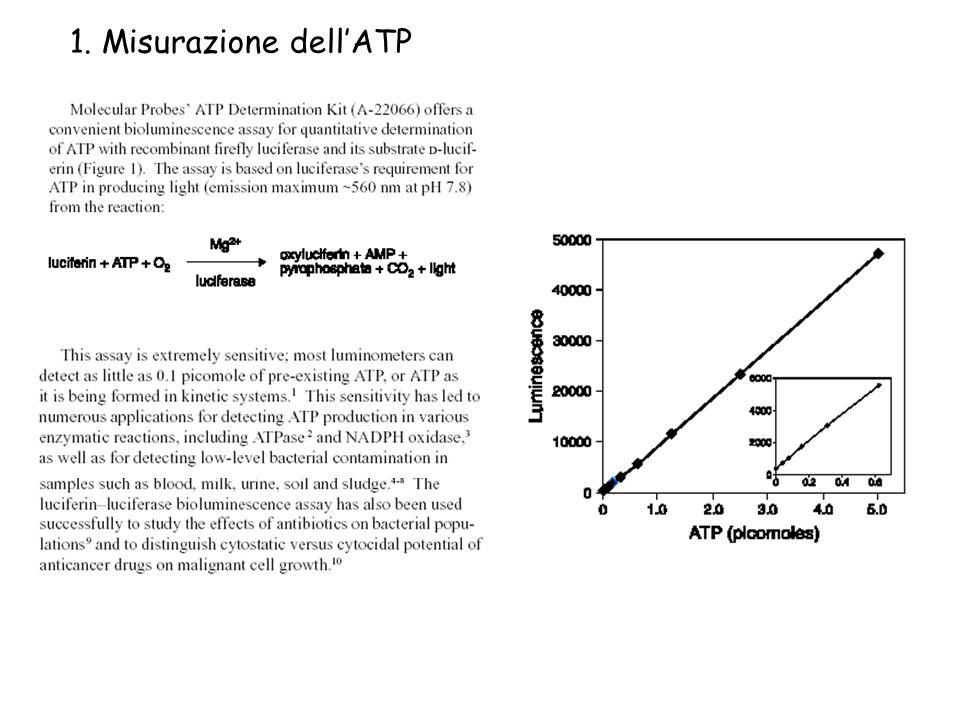 1. Misurazione dell'ATP