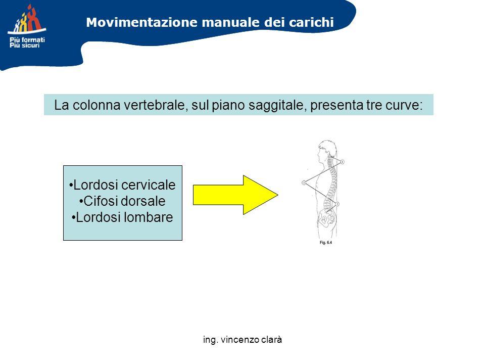 La colonna vertebrale, sul piano saggitale, presenta tre curve: