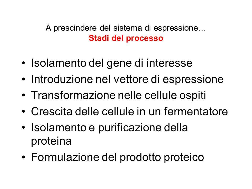 A prescindere del sistema di espressione… Stadi del processo
