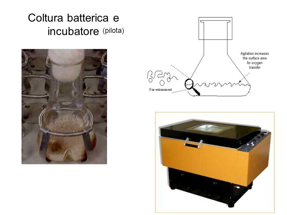 Coltura batterica e incubatore