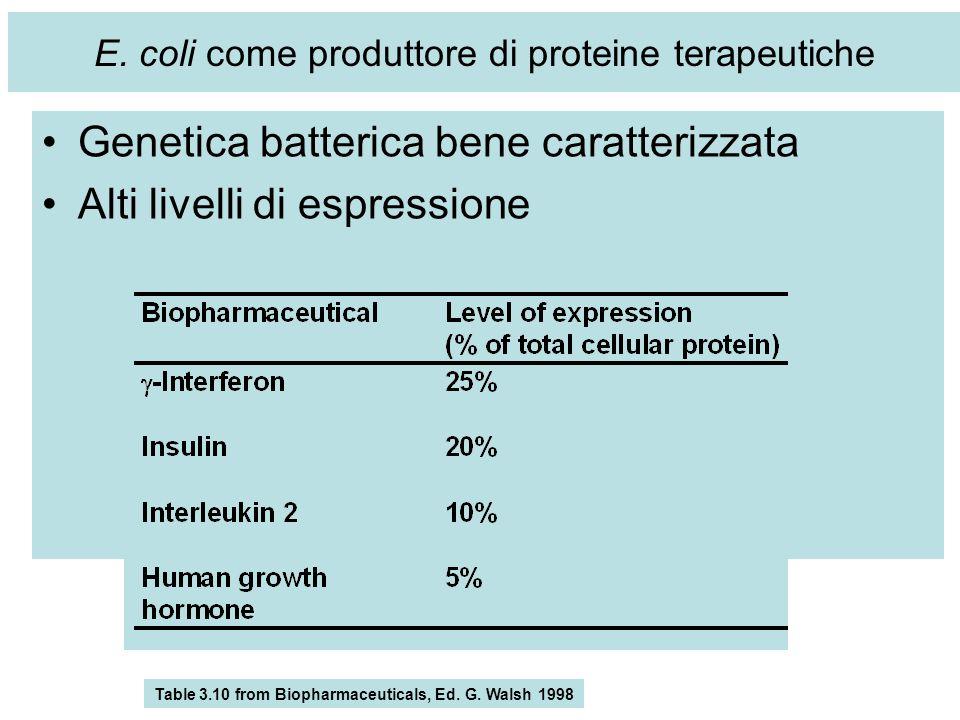 E. coli come produttore di proteine terapeutiche