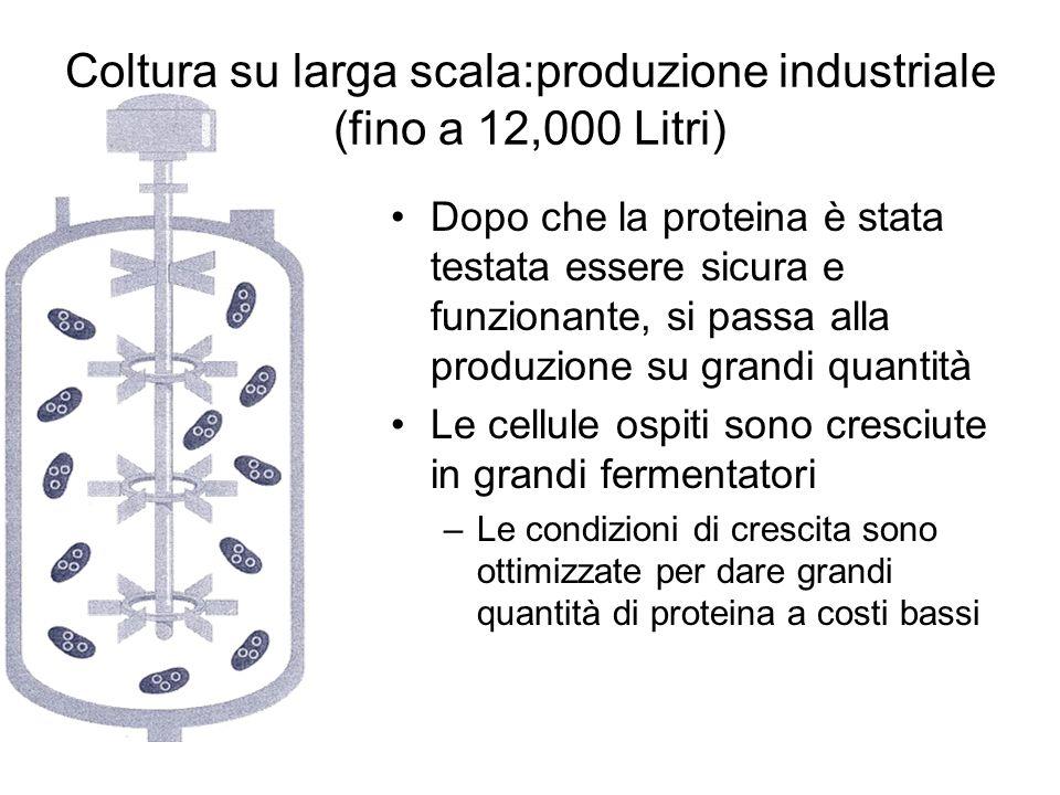 Coltura su larga scala:produzione industriale (fino a 12,000 Litri)
