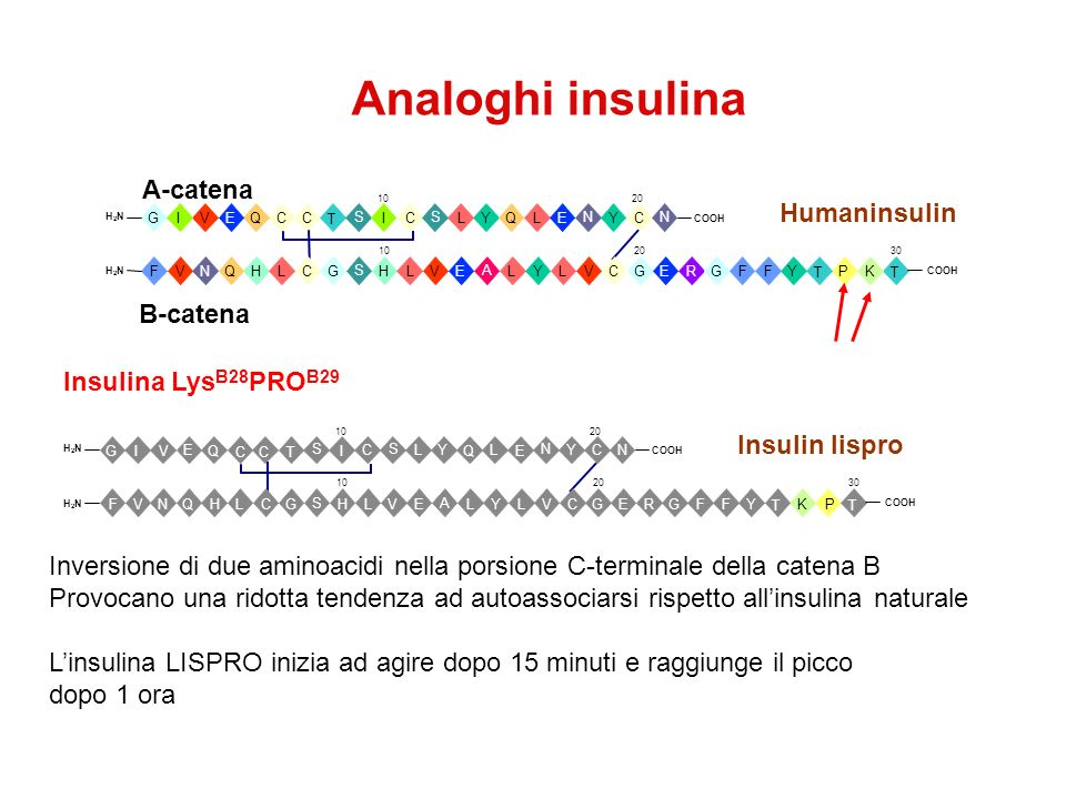 Analoghi insulina A-catena Humaninsulin B-catena Insulina LysB28PROB29