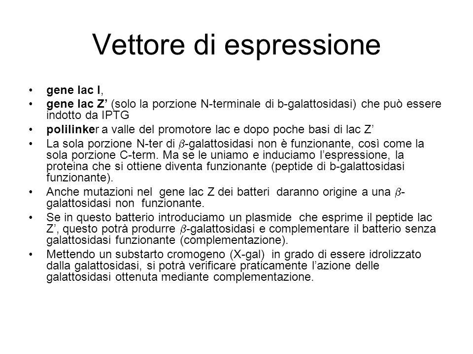 Vettore di espressione