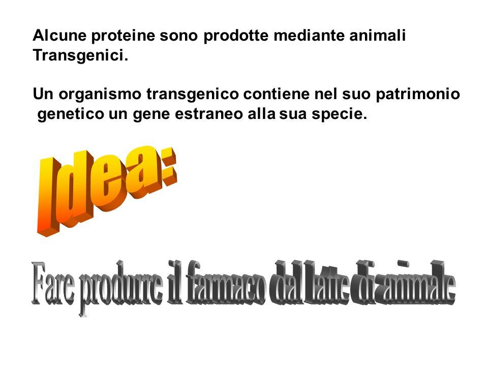 Fare produrre il farmaco dal latte di animale