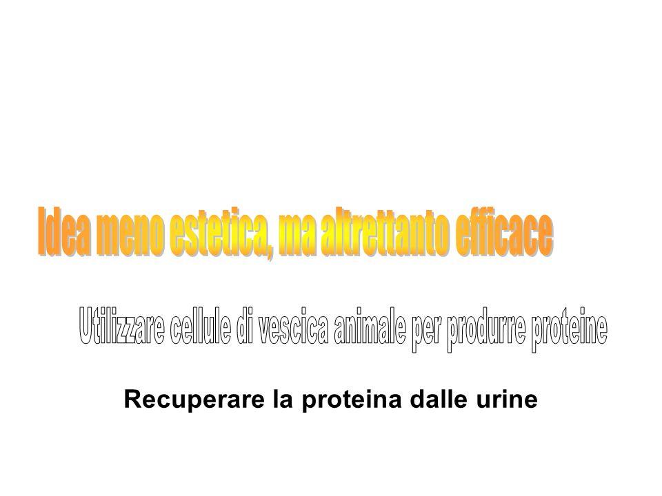 Recuperare la proteina dalle urine