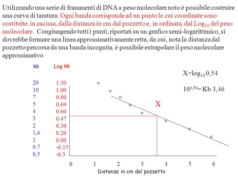 Utilizzando una serie di frammenti di DNA a peso molecolare noto è possibile costruire