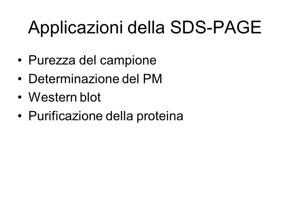 Applicazioni della SDS-PAGE