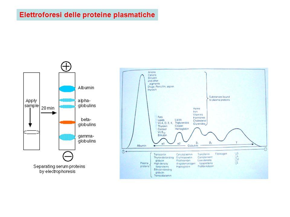 Elettroforesi delle proteine plasmatiche