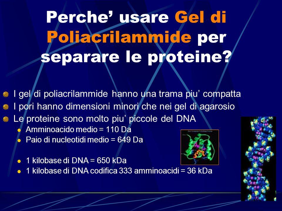 Perche' usare Gel di Poliacrilammide per separare le proteine