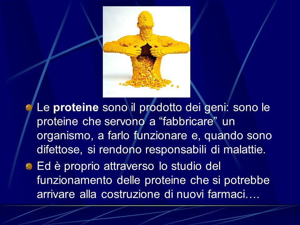 Le proteine sono il prodotto dei geni: sono le proteine che servono a fabbricare un organismo, a farlo funzionare e, quando sono difettose, si rendono responsabili di malattie.