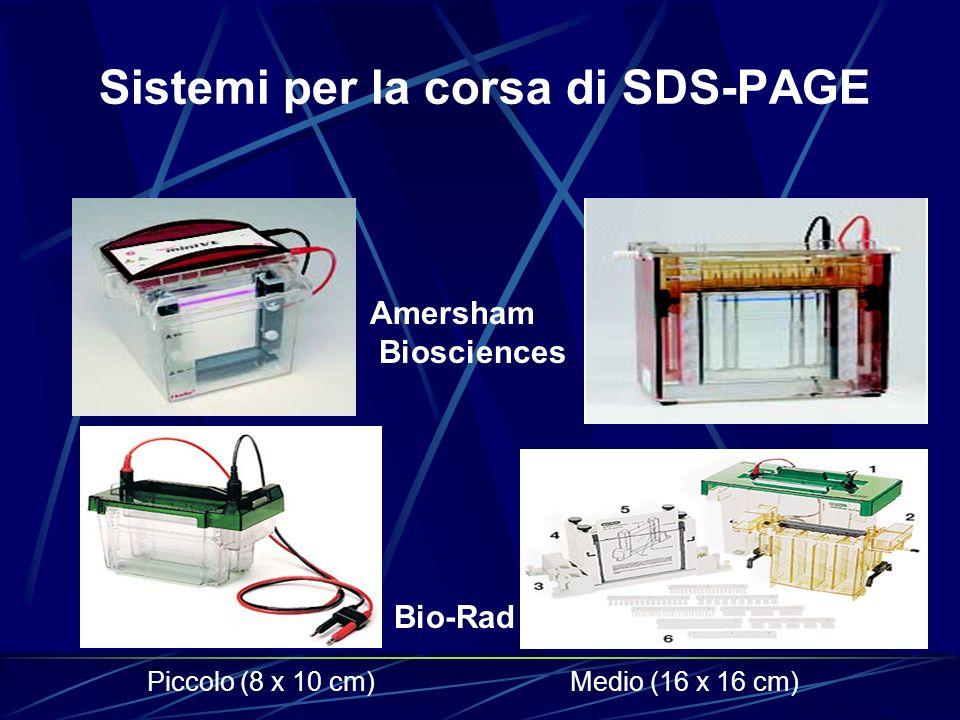 Sistemi per la corsa di SDS-PAGE