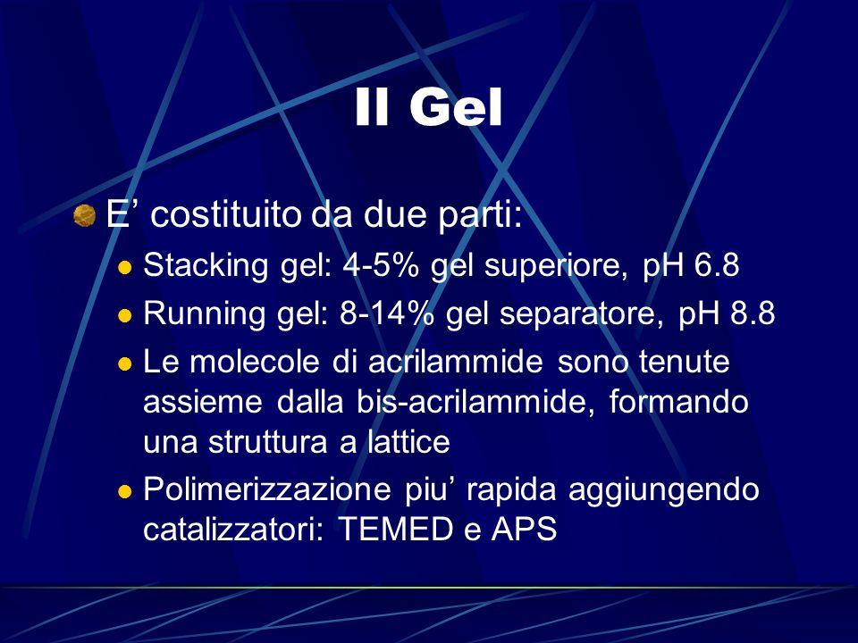 Il Gel E' costituito da due parti: