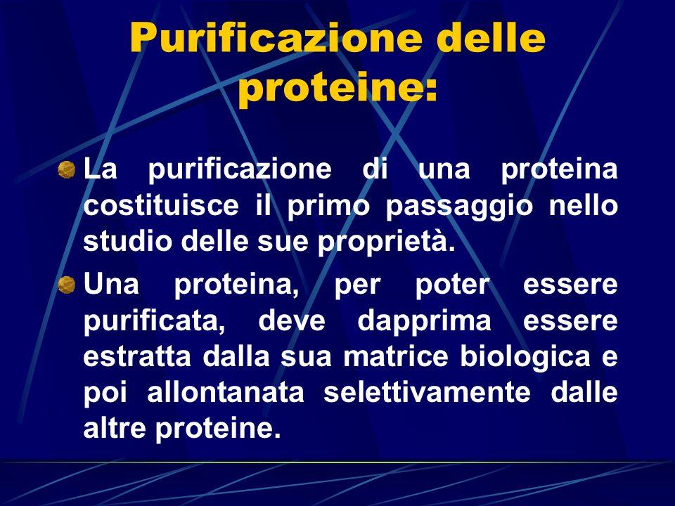 Purificazione delle proteine: