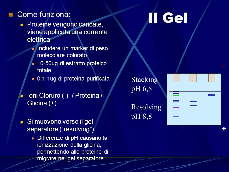 Il Gel Come funziona: Stacking pH 6,8 Resolving pH 8,8