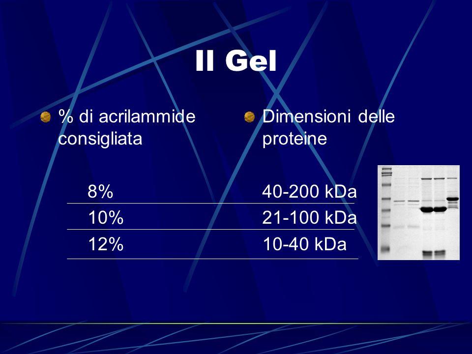 Il Gel % di acrilammide consigliata 8% 10% 12%